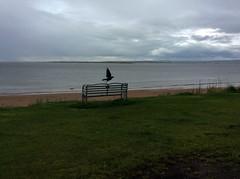 the beach at rosemarkie (violica) Tags: regnounito unitedkingdom scotland scozia highlands rosemarkie spiaggia beach morayfirth firthofmoray panchina bench blackisle corvo raven