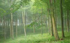0069 (gcu_sketcher) Tags: morning trees summer mist woodland landscape dawn countryside woods somerset daybreak xt1 xf1655