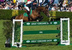 Great Yorkshire Show 2016 (Andy O'Brien UK) Tags: show horse fence jump jumping