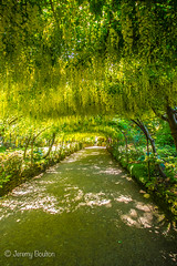 Laburnum Arch (JKmedia) Tags: boultonphotography flower flowers floral flora nationaltrust bodnantgardens northwales summer 2016 form beauty gardens laburnum archway arch gate gateway colourful yellow