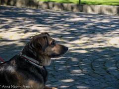 Waiting dogs (Anna N French) Tags: flowers nature garden july botanic circolo 2016 villataranto