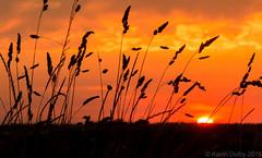 Sunset Silhouettes (Snap Tin) Tags: sunset summer sky orange sun nature field silhouette clouds lumix evening lowlight outdoor shapes july panasonic southyorkshire fz200 hootonlevitt