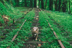 Forest Railroad (Jake Arciniega) Tags: portland oregon canon7dmarkii 50mm14 vscofilm photoshop lighroom internationalrosetestgarden forestpark pdx