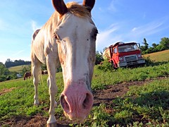 There's No Snout About It. (Silas_Xavier) Tags: pink sky horse plants brown white texture field grass animal clouds truck hair mammal nose mud farm ears dirt snout mane hoofs