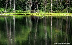 Upper Elk Lake (George Stenberg Photography) Tags: washingtonstate reflections trees water green calmwater
