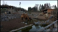Zoo, in Zurich Switzerland (Tamilpoems (Tamil kavithaigal)) Tags: animals zrich zrichfest zrichzoo zurichfest zurichcity zurichsee zurich zoo wald waldtiere tiere tiger google europe switzerland swissmountains schweiz suisse summer bern geneva glarus interlaken mnnedorf