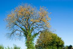Herbstchic