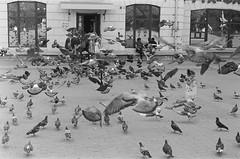 Take off (elgartheseven) Tags: ukraine street birds ternopil kid