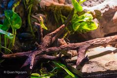 FujiXE2-0201 (QTTheory) Tags: cvg cincinnati ohio newport aquarium newportaquarium fujifilm fujinon xe2 xf 1855mmf284rlmois
