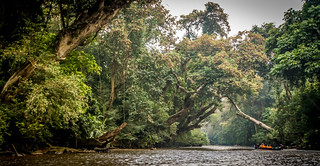 Travel into the heart of the rainforest