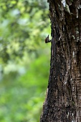 Hey there! (Ramesh Adkoli) Tags: birds wildlife landscape nagarahole d500 capturenx