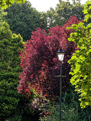 layers of colour (scottprice16) Tags: england lancashire clitheroe clitheroecastle castlepark trees summer august layers lamp colour canong10
