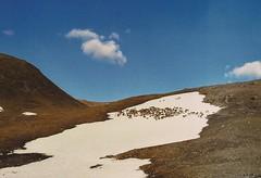 Lapland (marlinhelene2) Tags: canon a1 kodak iso 200 film rendeer rentier herde snow glacier lapland