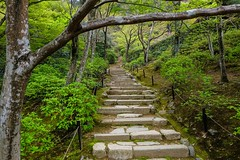 Jojakko-ji III (Douguerreotype) Tags: shrine temple buddhist kyoto japan garden green stairs steps tree