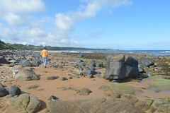 Sugar Sands, Norrthumberland (Fiona in Eden) Tags: northumberland holiday coast england beaches beach cliff sand sea sugarsands rockpools