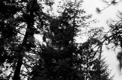 8.2016 Elwah Falls and Loon Mountain BW E31 (Jcicely) Tags: monthaugust otherkeywordsactivityhiking otherkeywordscamerafilmpentax35mm otherkeywordscamerafilmpentax35mmbwfilm otherkeywordsnaturegreenerytrees placesportland year2016