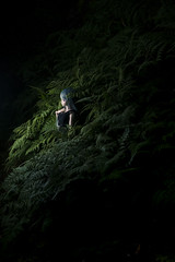 Forest (haru88) Tags: dd dds volks doll dollfie dollfiedream