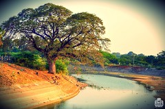 Beautiful Landscape (Karthik SWOT) Tags: lighting travel sunset sun reflection tree cute water beautiful river landscape creativity nikon mood dam background scenary romantic trichy tanjore kallanai d5100