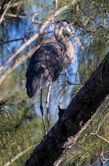 2015_03_30_8069.jpg (Lake Worth) Tags: bird nature birds animal animals canon wings florida wildlife feathers wetlands everglades waterbirds southflorida 2xextender sigma120300f28dgoshsmsports