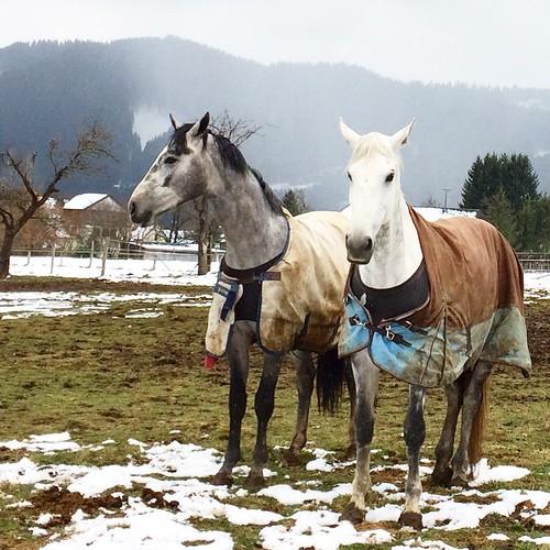 Koně v Seckau #seckau #austria #rakousko #styrsko #oesterreich #kone #horses