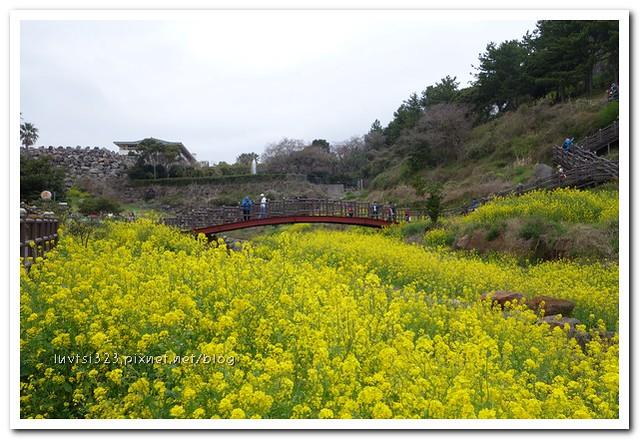 사귀포유체꽃축제34