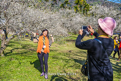Harry_23314,,,,,,,,,,,,,,,,,,,,Plum,Plum Tree,Tree,Fruit,Farm (HarryTaiwan) Tags: tree fruit nikon farm plum taiwan     plumtree  d800                    harryhuang  hgf78354ms35hinetnet adobergb