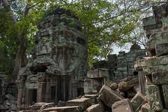 Prasat Ta Prohm (ប្រាសាទតាព្រហ្ម), Siem Reap, Cambodia