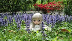May 7, Blythe a Day - Spring Flowers!