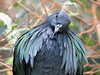 Bird (bookworm1225) Tags: zoo october 2014 minnesotazoo northerntrail tropicstrail