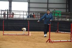agility260 (jaimekay16) Tags: dog training austin agility k9 xpress nadac k9x