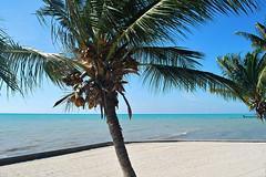 Key West (Florida) Trip, November 2014 0287Ri 4x6 (edgarandron - Busy!) Tags: keys florida keywest floridakeys higgsbeach westmartellotower keywestgardenclub