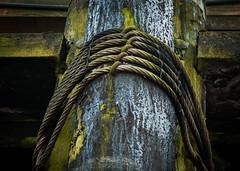 Mold & Rope DSC_6875 (Katrina Wright) Tags: dock marine rope mold