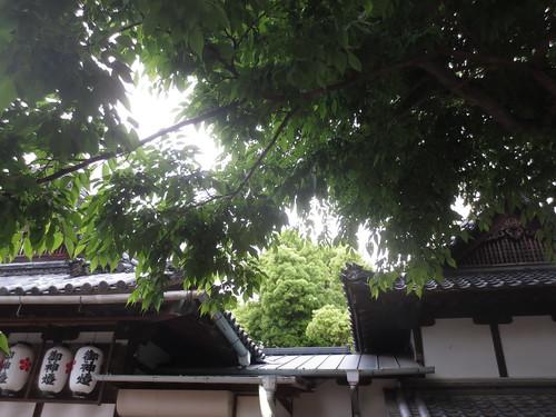 神社の木陰