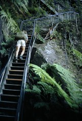 The Giant Stairway, Blue Mountains National Park, NSW, April 1970. (garratt3) Tags: aus bluemountains bluemountainsnationalpark bushwalking film mountsolitary pentax rural wilderness australia kodachrome nsw newsouthwales paddymade