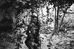 between the vines (gorbot.) Tags: leicam8 voigtlander28mmultronf19 mmount rangefinder blackandwhite monochrome vscofilm roberta sicily sicilia pantalica riservanaturale