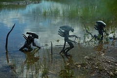 -Xenomorphs- (Felinomoruno) Tags: water movie toy action alien collection predator figures giger neca avp2 aliensvspredators