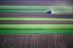 (Oroku1) Tags: njiva vojvodina srbija kljajicevo backa austrohungary silos field corn plough plowing tillage green wheat belarus belorusija tractor agriculture farming drive farm