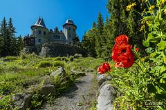 fairytale castle (Tiziano Photography) Tags: flowers red mountains castle landscape nikon d750 fiori rosso castello paesaggio valledaosta gressoney 14mm castelsavoia nikond750