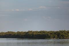 Pescador - Mar Pequeno _MG_0458_PHZ (Paulo Henrique Zioli) Tags: verde green mar pesca mirante canoa pescador fishman mangue valedoribeira tarrafa iguape atlanticforest mataatlntica caiara mardedentro marpequeno tocadobugio mardedentrogreen