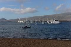 60071089 (wolfgangkaehler) Tags: 2016 southamerica southamerican ecuador ecuadorian galapagosislands latinamerica latinamerican galapagosnationalpark santiagoisland santiagoislandjamesisland santiagoislandecuador santiagoislandgalapagos jamesisland jamesislgal jamesislandgalapagos jamesislandsantiagoisland tourism travel boat catamaran catamarans galapagosqueen tourboats