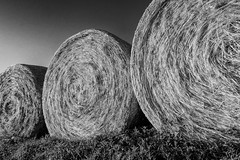 Summer's first harvest (FotoFloridian) Tags: summer bw monochrome farm newhampshire nik hay bales