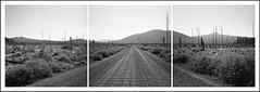 Davis Lake Road Triptych (ASHLANDJET) Tags: road blackandwhite panorama 6x6 tlr film monochrome oregon centraloregon analog rolleiflex mediumformat square triptych xp2 vintagecamera ilford 35e planar cascadelakes davislake rolleiflexpanoramahead