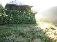 Dream House (Alex Journey) Tags: travel plants house tourism nature architecture georgia photography photo nice paradise village view journey georgian guria   jorney        gurian