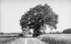 (salparadise666) Tags: bw germany 50mm nikon natur hannover nils land sw 100 fe agfa region landschaft rs apx 160 caffenol eseries calenberger volkmer