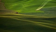 Palouse Undulations (Joaquin James Javier) Tags: palouse washington fields crops plane duster green hills