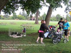 DAT2016_Crowd+Corgi_1057 (greytoes_99) Tags: agility cat dat2015 dat2016 event humanesocietytacoma people summer tacoma tacomahs volunteers dog humananimalbond lakewood wa us
