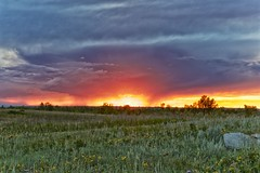 Sunset under the storm (John Andersen (JPAndersen images)) Tags: calgary clouds firstnations green lightning medicinewheel nosehillpark red storm sunset wildflowers