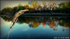 Straw  (frdmk) Tags: straw river autumn water reflection trees nature forrest colorful colors