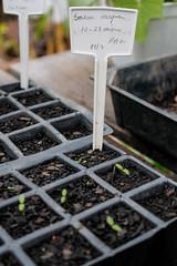 (mffproducoes) Tags: hortas jardinagem ecolgica sustentabilidade agrofloresta agroecologia mffprodues fotografia plantas