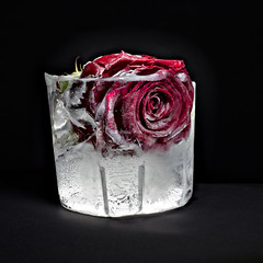 Frozen II (redy1966) Tags: 2016 still life tabletop flower deep freezer rose ice concept frozen